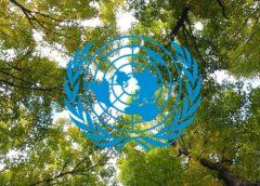 UN forrest